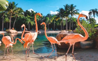 Love Flamingos? Discovery Cove's Flamingo Experience is for You!